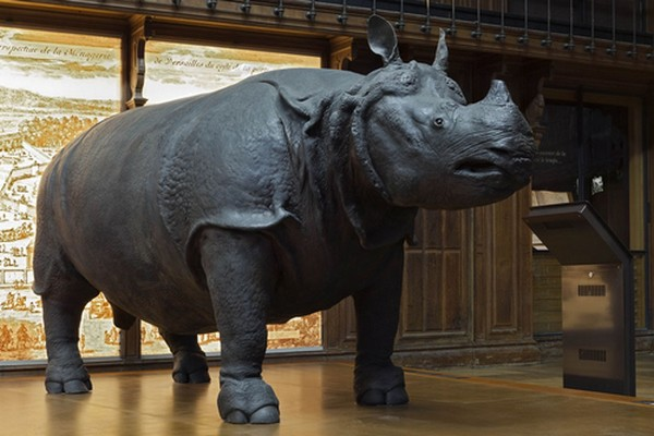 rhino-lxv-new_faye_924_616b