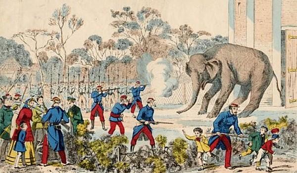 Elephant-Siege-Paris
